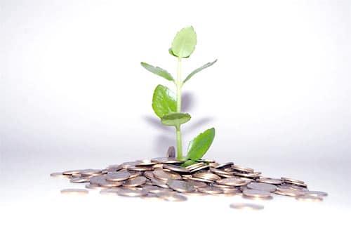 roślinka wyrastająca z pieniędzy